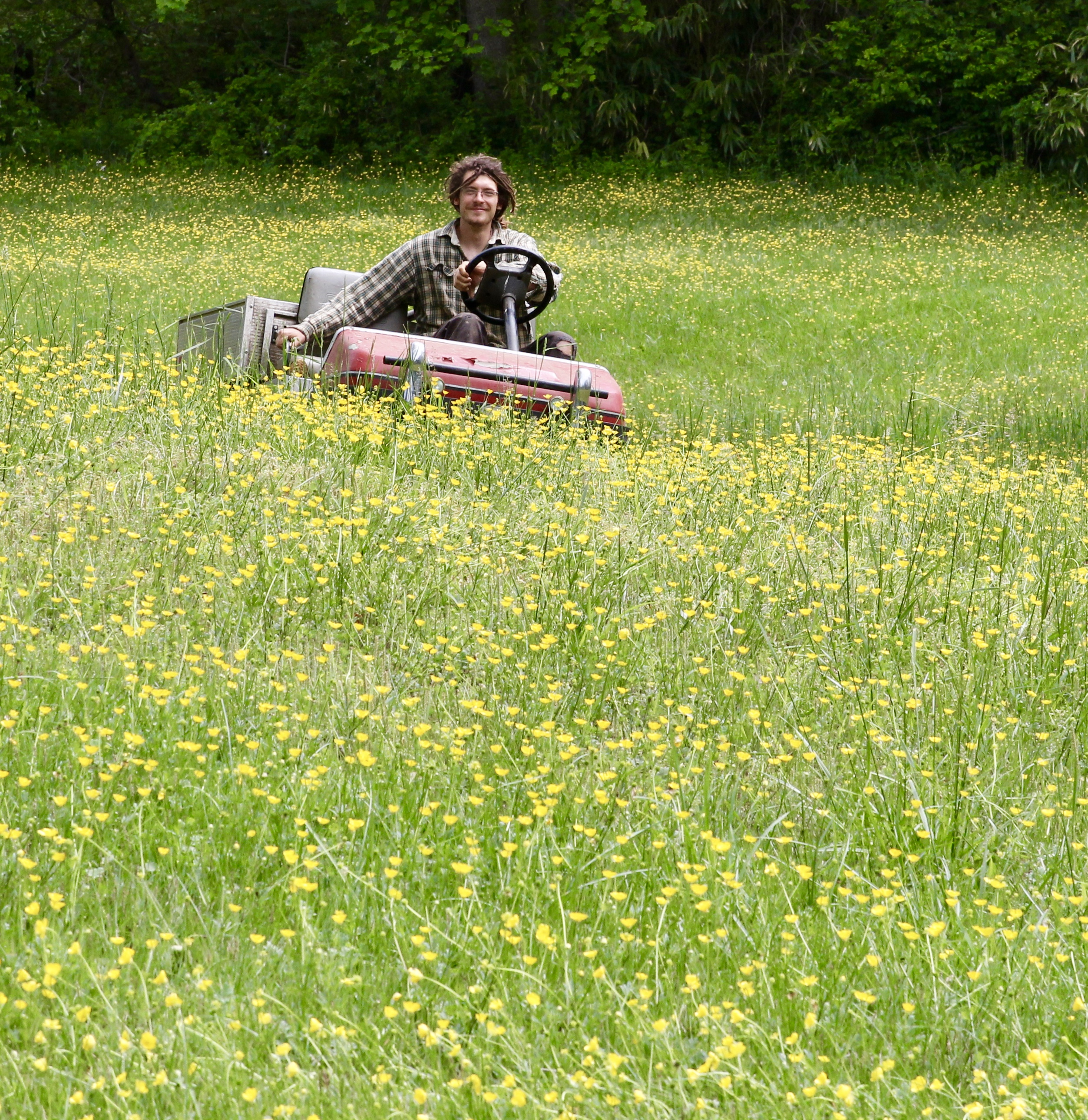 Jared in the buttercups gfg – Version 2