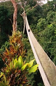 canopy trail explorama