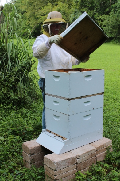 Apiarist Dick Ransom checking the Green Farmacy Garden hives