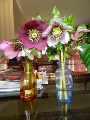Helleborus bouquets to dapple the home.*