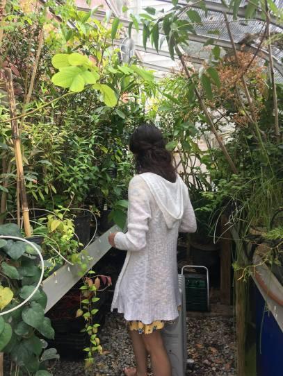 Annie-Sophie_greenhouse